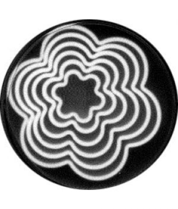 Plastic Cookie Cutters - 5 piece - Flower
